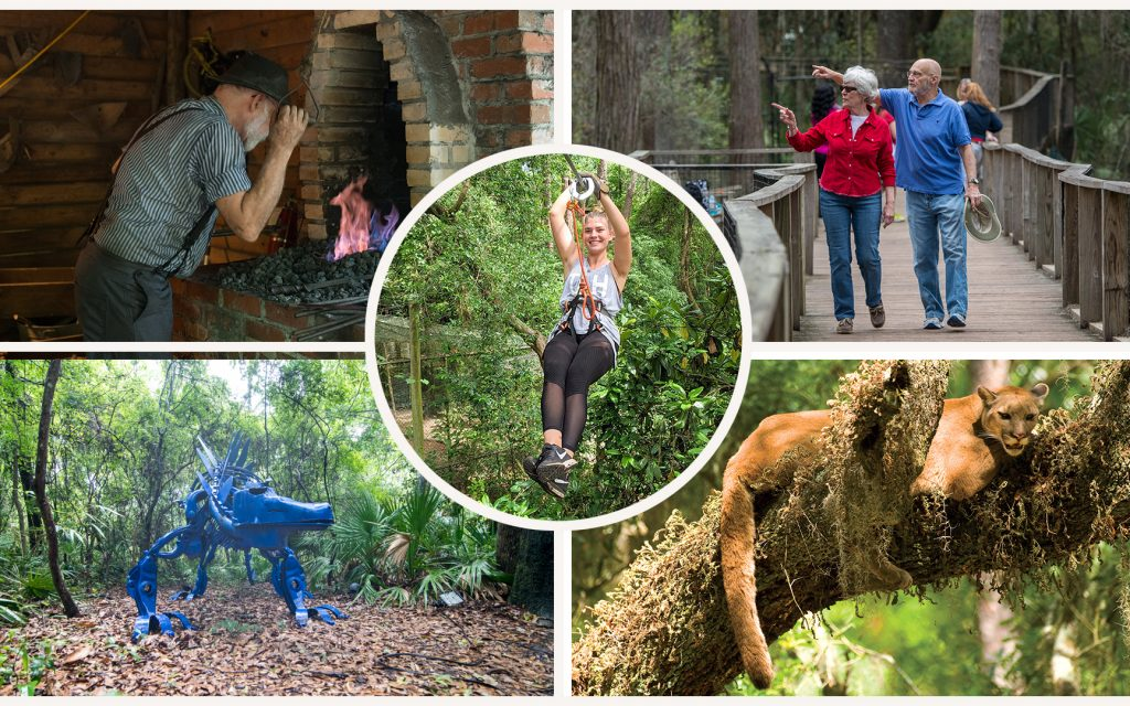 collage of tallahassee museum images, zipline, panther, dinasaur, nature trail and iron worker